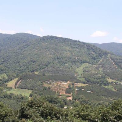 Amorentia Estate