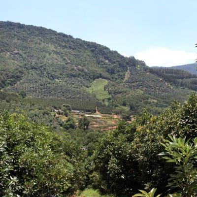 Amorentia Estate, Produce, Macadamia Trees