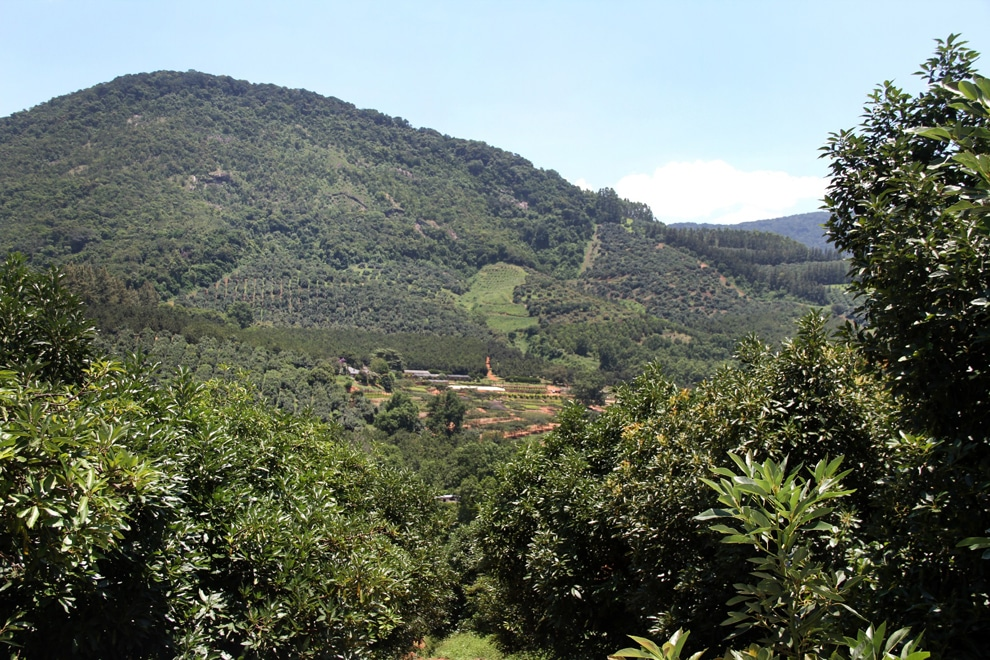 Amorentia Estate, Produce, Macadamia Trees