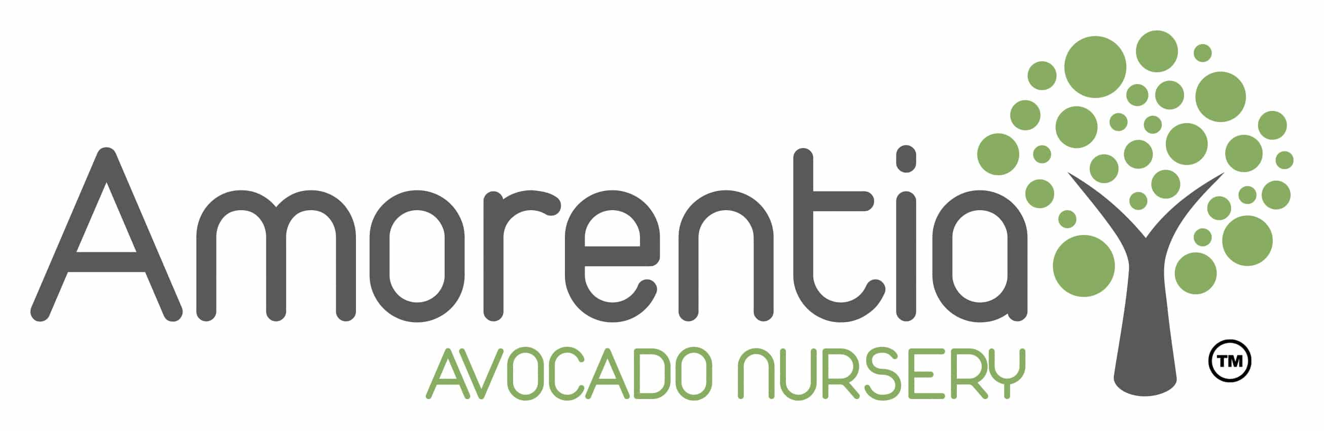 Amorentia_Avocado_Nursery
