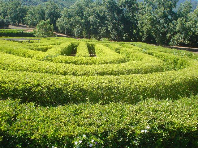 Amorentia estate, maze