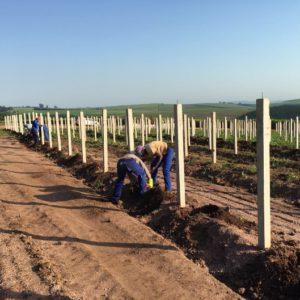 KZN - Planting under way