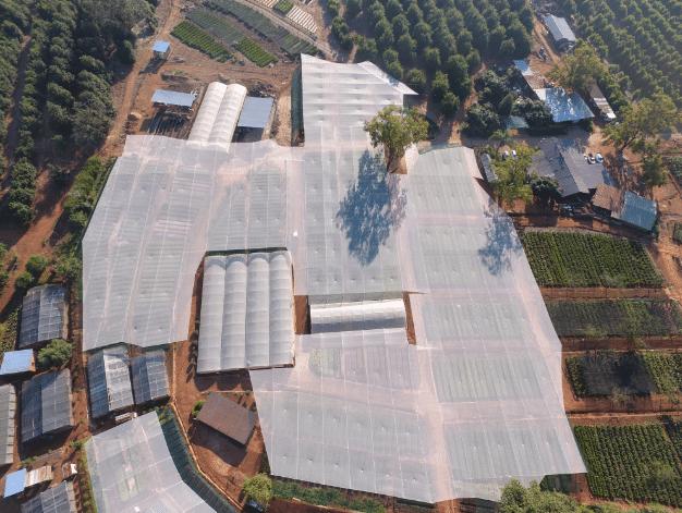 Macadamia Nursery, Amorentia