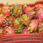 Dragon Fruit, Amorentia