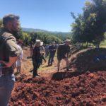 macadamia, farmers, macadamia trees