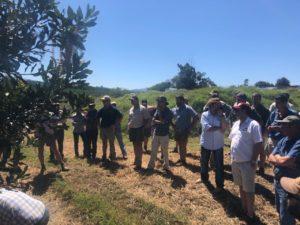 farmers, macadamia nuts