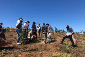 farmers, amorentia, practical, macadamia, macadamia trees