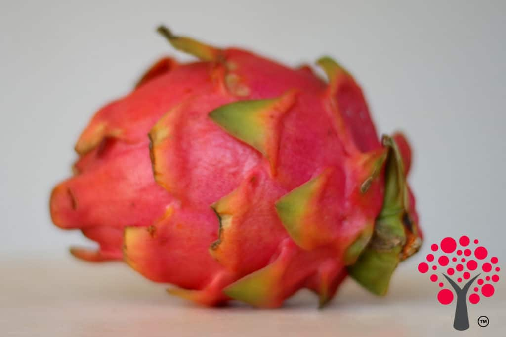 Dragon Fruit - Amorentia Sweet Dragon Fruit Nursery