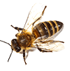 bees-collection-PS3KVEX